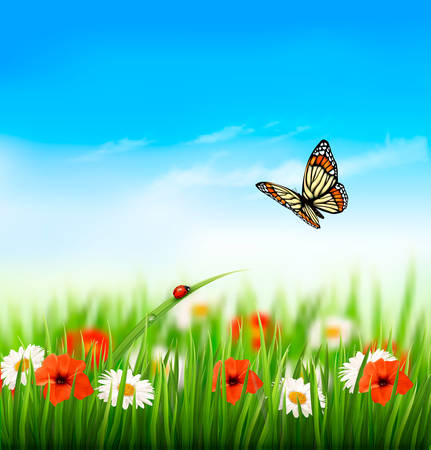 Nature, été, fleurs colorées avec papillon. Vector illustration. Vecteurs