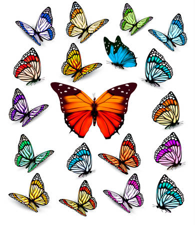 butterfly isolated: Set of different colorful butterflies. Vector.