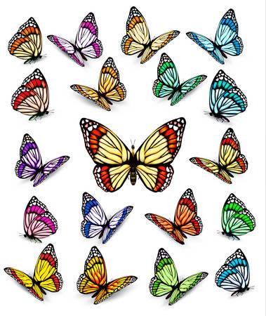 Set van verschillende kleurrijke vlinders. Vector.