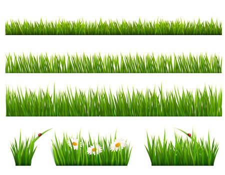 grass vector: Big collection of green grass. Vector. Illustration