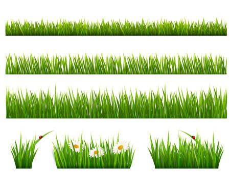 Big collection of green grass. Vector. Illustration
