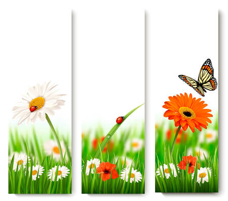 summer nature: Summer nature banners with colorful flowers and butterfly. Vector.