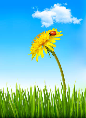 turf flowers: Dandelion on a blue sky and green grass background with a ladybug. Vector.