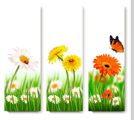 summer nature: Summer nature banners with colorful flowers and butterfly. Vector