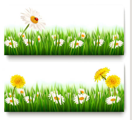 Two nature banners with colorful spring flowers with ladybug. Vector Reklamní fotografie - 39536673