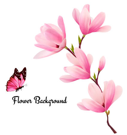magnolia flower: Nature background with blossom branch of pink flowers and butterfly. Vector Illustration