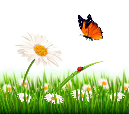 Nature summer daisy flower with butterfly. Vector illustration. Ilustração