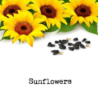sunflower seeds: Sunflowers background with sunflower seeds. Vector. Illustration