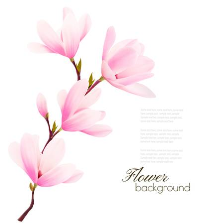 magnolia tree: Flower background with blossom branch of pink flowers. Vector Illustration