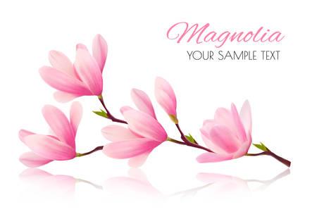 ピンクのマグノリアの花枝と花の背景。ベクトル
