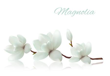 Flor de fondo con la rama de la flor de magnolia blanca. Vector Ilustración de vector