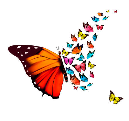 white butterfly: Beautiful butterfly background. Vector.
