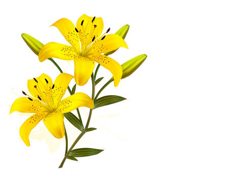 yellow vector: Flower Background With Yellow Beautiful Lilies. Vector.