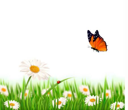 Naturaleza flores de la margarita del verano con la mariposa. Ilustración del vector.