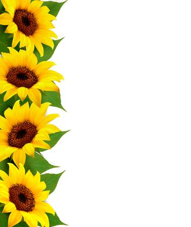 Sunflowers Background With Sunflower And Leaves. Vector 일러스트