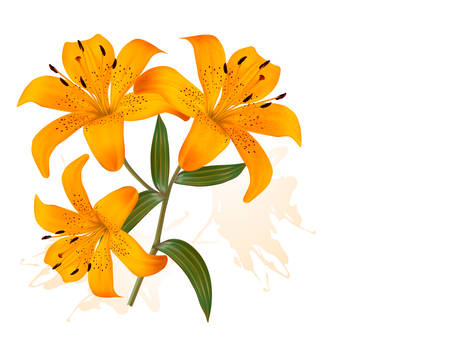 orange lily: Flower Background With Three Beautiful Lilies. Vector.
