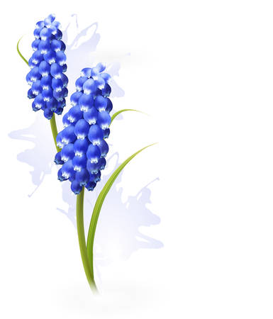 fragrant bouquet: Nature background with blue flowers. Vector