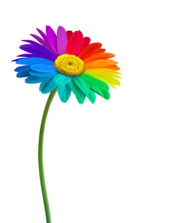 flores moradas: Arco iris de fondo flor de la margarita. Vector.