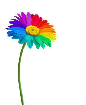 flowers on white: Rainbow daisy flower background. Vector.