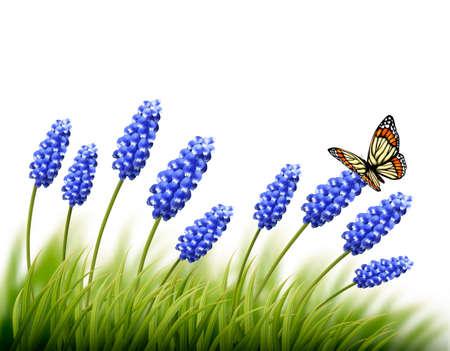 lavanda: Fondo de la lavanda hermosa con una mariposa. Vector.