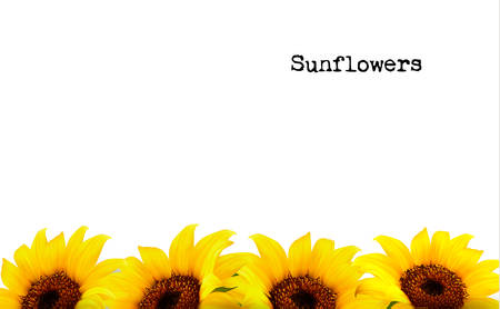 Nature Background With Yellow Sunflowers. Vector