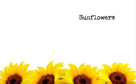 semillas de girasol: Fondo de naturaleza con girasoles amarillos. Vector Vectores