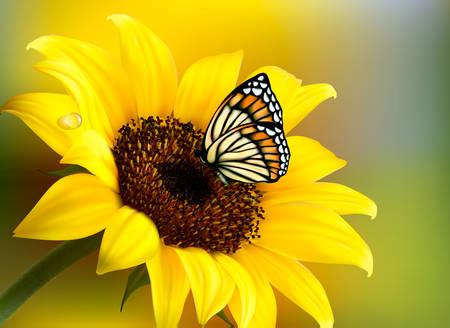 蝶と黄色いヒマワリ。ベクトル。