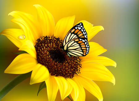 Yellow sunflower with a butterfly. Vector. Çizim