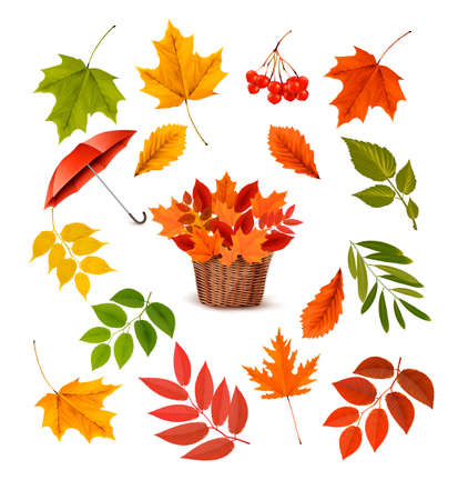 organic background: Set of colorful autumn leaves and objects. Vector illustration.