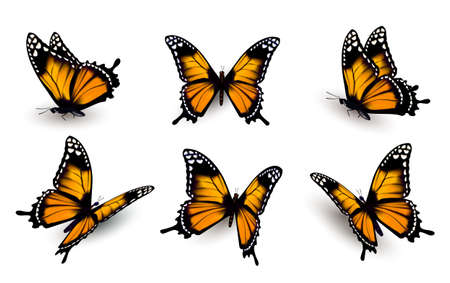 orange yellow: Six butterflies set. Illustration