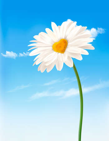 Daisy with heart shaped middle. Valentine's Day background. Vector. 일러스트