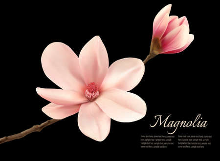 magnolia tree: Branch with two pink magnolia flowers. Vector.