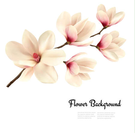 Flower background with blossom branch of white magnolia. Vector Illustration