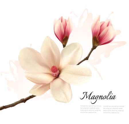 Beautiful magnolia flower background. Vector. Stock Illustratie
