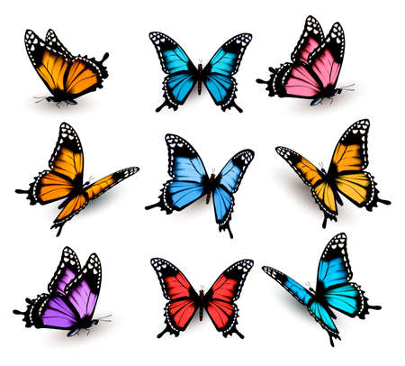 blue background: Big collection of colorful butterflies. Vector Illustration