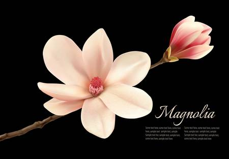Beautiful white magnolia flower isolated on a black background. Vector. Vettoriali