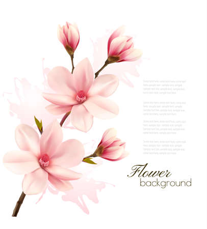 magnolia tree: Spring background with blossom brunch of pink flowers.