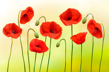 papaver: Green poppy background. Vector.