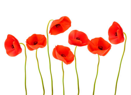 Nature background with red poppies. Vector.
