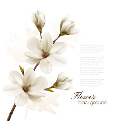 Spring background with blossom brunch of white magnolia. Vector