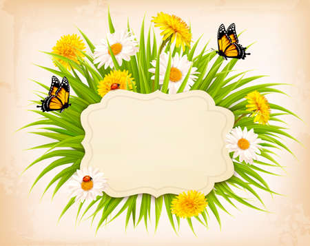 grass flowers: Spring banner with grass, flowers and butterflies.