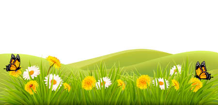 grass flowers: Spring background with grass, flowers and butterflies. Illustration