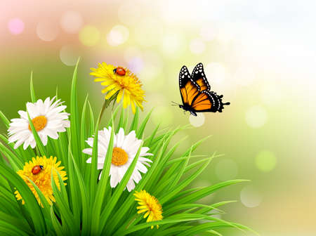 Nature summer daisy flowers with butterfly