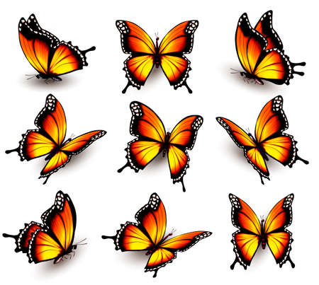 milkweed: orange butterfly in different positions.