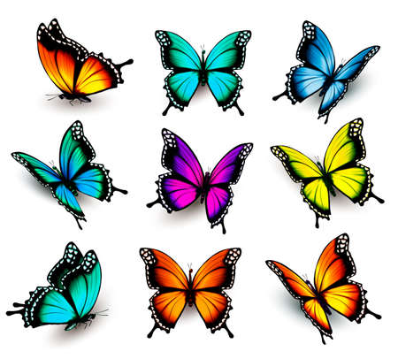 butterfly wings: Collection of colorful butterflies, flying in different directions.