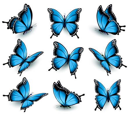 Set of beautiful blue butterflies.
