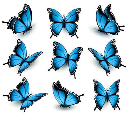 mariposa: Conjunto de bellas mariposas azules.