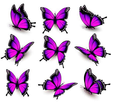 fioletowy motyl w różnych pozycjach.