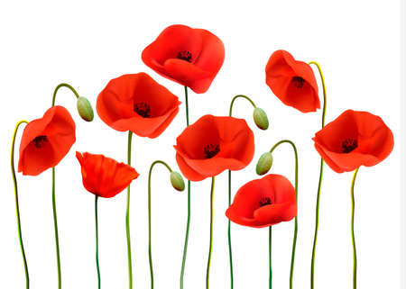 Nature background with red beauty poppies. Ilustração