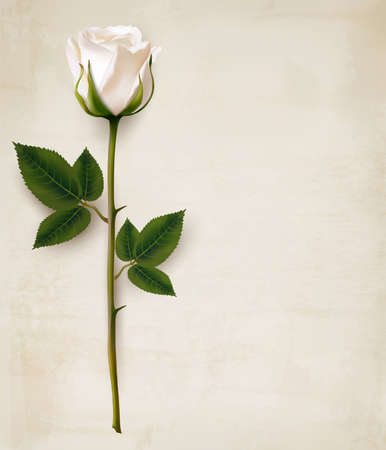 Happy Mother's Day background. Single white rose on an old paper background.
